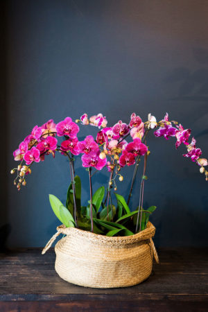 large luxe orchid plant display
