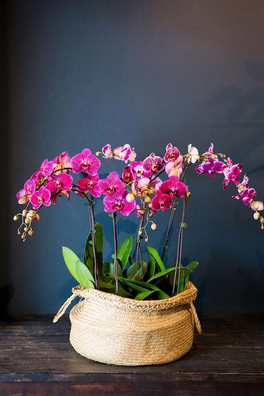 Brisbane florist flower arrangements bouquet boutique large luxe orchid plant display izmirmasajfo